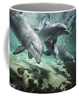 Four Bottlenose Dolphins Hawaii Coffee Mug