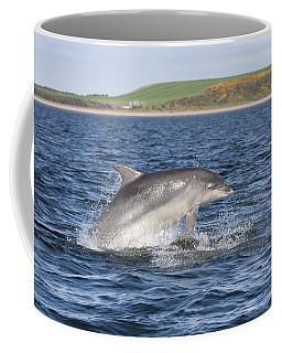 Bottlenose Dolphin - Scotland  #32 Coffee Mug