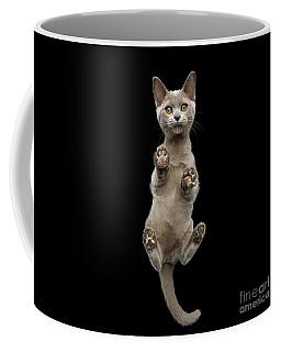 Coffee Mug featuring the photograph Bottom View Of Kitten by Sergey Taran