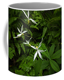 Woodland Treasures Coffee Mug by William Tanneberger