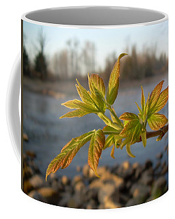 Coffee Mug featuring the photograph Box Elder Leaves In Dawn Light by Kent Lorentzen