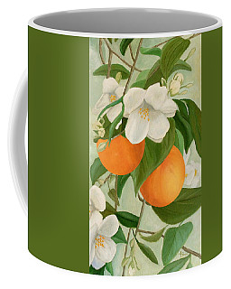 Branch Of Orange Tree In Bloom Coffee Mug
