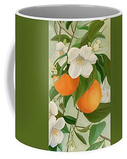 Branch Of Orange Tree In Bloom Coffee Mug