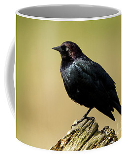 Brewers Blackbird Resting On Log Coffee Mug