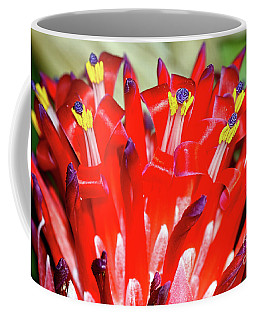 Coffee Mug featuring the photograph Bright Blooming Bromeliad By Kaye Menner by Kaye Menner