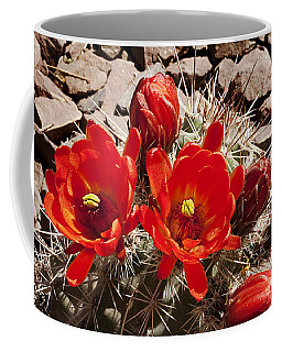Coffee Mug featuring the photograph Bright Orange Cactus Blossoms by Phyllis Denton