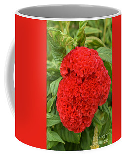 Bright Red Cockscomb Coffee Mug