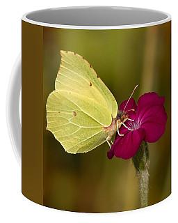 Coffee Mug featuring the photograph Brimstone 1 by Jouko Lehto