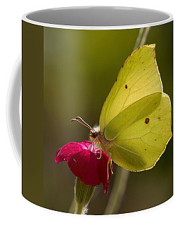 Coffee Mug featuring the photograph Brimstone 2 by Jouko Lehto