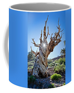 Bristlecone And Sun Coffee Mug