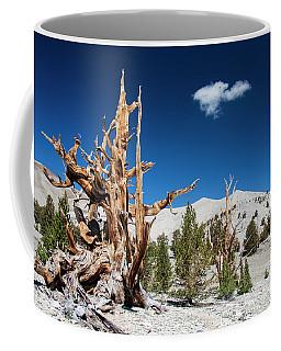 Bristlecone Pine - Pinus Longaeva Coffee Mug