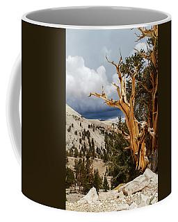 Bristlecone Pine Tree 8 Coffee Mug