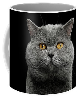 Coffee Mug featuring the photograph British Cat With Big Wide Face by Sergey Taran