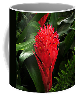 Bromeliad 9-18-15 Coffee Mug