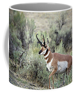 Bronghorn Buck Coffee Mug