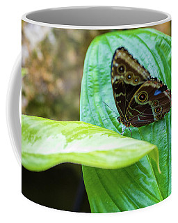 Brown And Blue Butterfly Coffee Mug