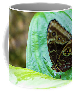 Coffee Mug featuring the photograph Brown And Blue Butterfly by Raphael Lopez