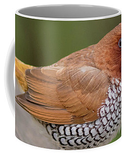 Coffee Mug featuring the photograph Brown Bird by Raphael Lopez