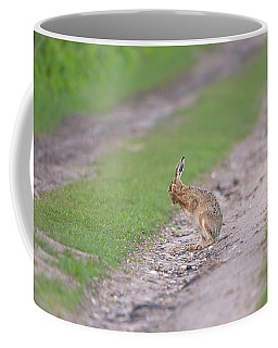 Brown Hare Cleaning Coffee Mug