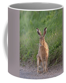 Brown Hare Sat On Track At Dawn Coffee Mug