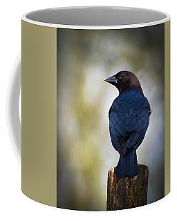 Brown-headed Cowbird Coffee Mug