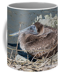 Brown Pelican 3 March 2018 Coffee Mug