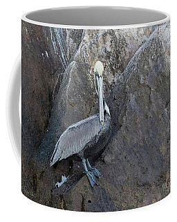 Brown Pelican At Lands End Coffee Mug
