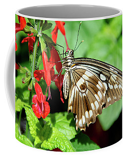 Brown Swallowtail Butterfly Coffee Mug