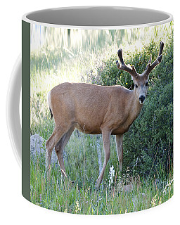 Buck In Velvet Coffee Mug