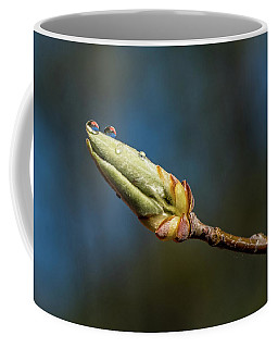 Coffee Mug featuring the photograph Buds With Water Drops by Paul Freidlund