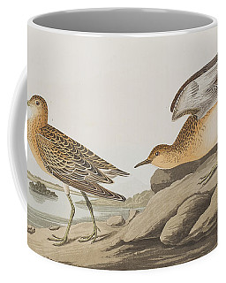 Buff Breasted Sandpiper Coffee Mug