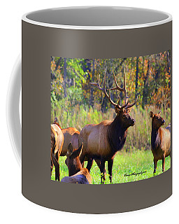Buffalo River Elk Coffee Mug