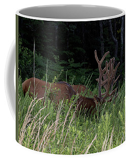 Bull Elk Grazing Coffee Mug
