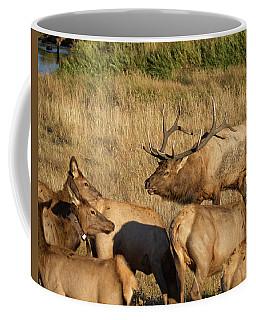 Bull Elk With His Harem Coffee Mug