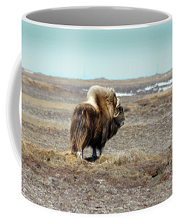 Bull Musk Ox Coffee Mug