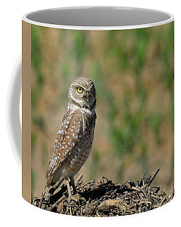Burrowing Owl Hill Coffee Mug