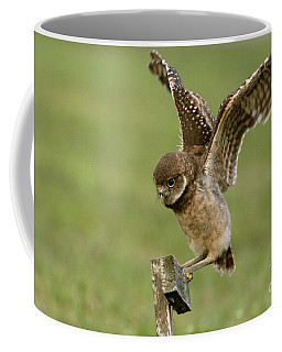 Burrowing Owl - Learning To Fly Coffee Mug