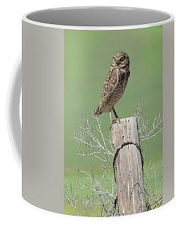 Burrowing Owl On Post Coffee Mug