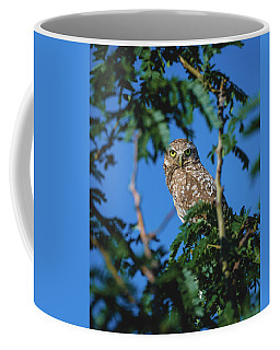 Burrowing Owl Sitting In A Tree Coffee Mug