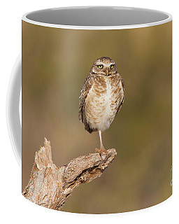 Burrowing Owl Taking A Break Coffee Mug