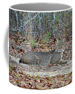 Coffee Mug featuring the photograph Bushed Bobcat by Al Powell Photography USA