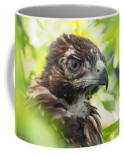 Buteo Jamaicensis Coffee Mug