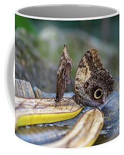 Coffee Mug featuring the photograph Butterflies Eating Bananas by Raphael Lopez