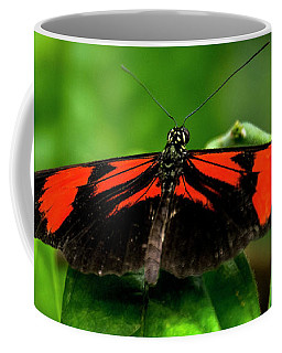 Butterfly #1955 Coffee Mug