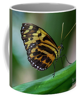 Butterfly #1963 Coffee Mug