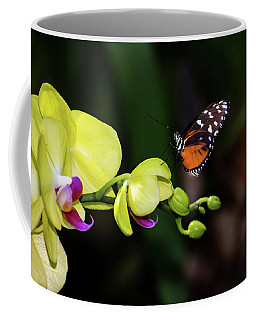 Butterfly And Orchid  Coffee Mug