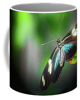 Coffee Mug featuring the photograph Butterfly At Cleveland Botanical Gardens by Richard Goldman
