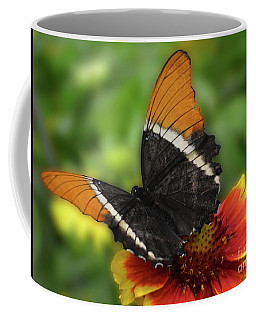 Butterfly In Brown Coffee Mug by Cindy Manero