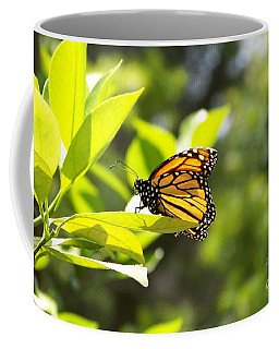 Coffee Mug featuring the photograph Butterfly In Sunlight by Carol  Bradley