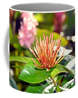 Butterfly Snack Coffee Mug